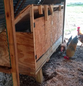 Raising Chicks for Beginners: Tips From an Intermediate Homesteader