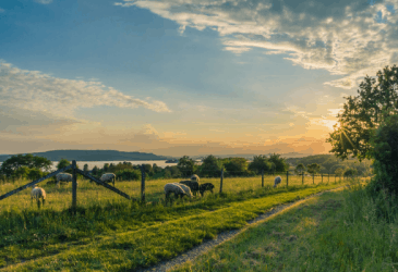 What You Should Know About Homesteading Before Homesteading
