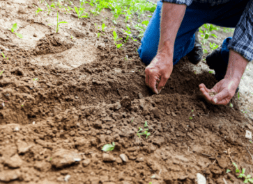 Realistic Goals You Can Make as a Homesteading Beginner