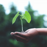 Natural Sources of Nitrogen for Plants (that are Easily Accessible!)