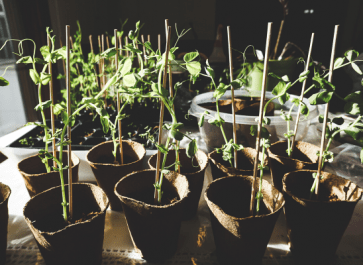 COVID-19 Victory Gardens: What to plant and why
