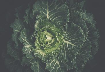 fast growing vegetables (1)