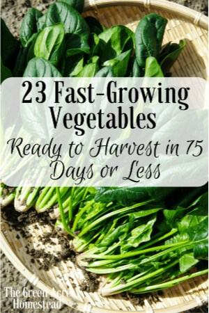 23 fast growing vegetables