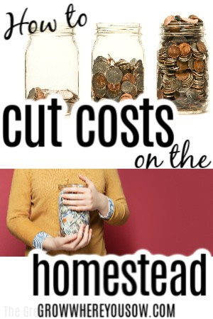 how to cut homestead costs