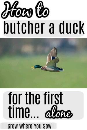 butcher a duck