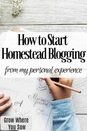 how to start homestead blogging