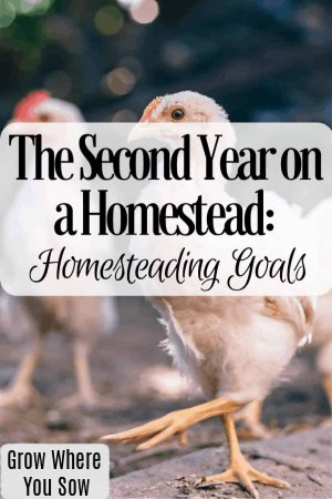 second year on the homestead