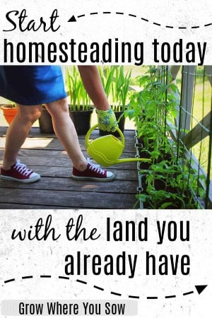 start homesteading today