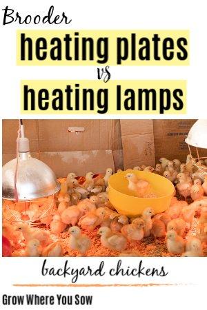 brooder heating plates vs heating lamps