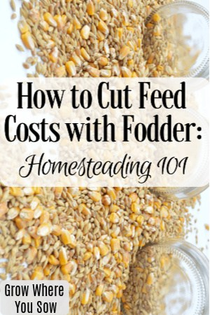 cut feed costs with fodder