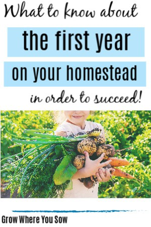 first year on the homestead