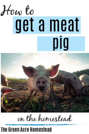 get a pig