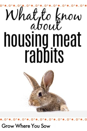 raising meat rabbits