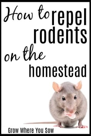 repel rodents