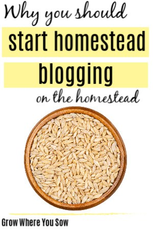 why you should start homestead blogging