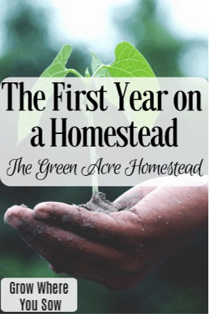 first year on a homestead