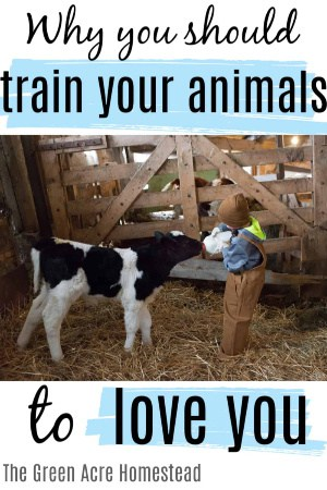 good reasons to train your animals