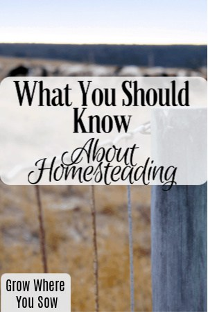 what you should know about homesteading