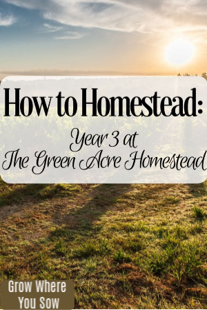 how to homestead year 3