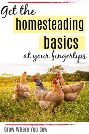 the ultimate homesteading basics book