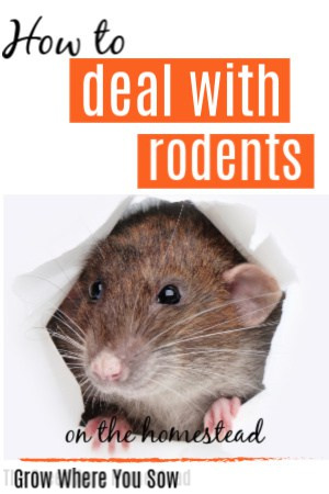 rodents on the homestead