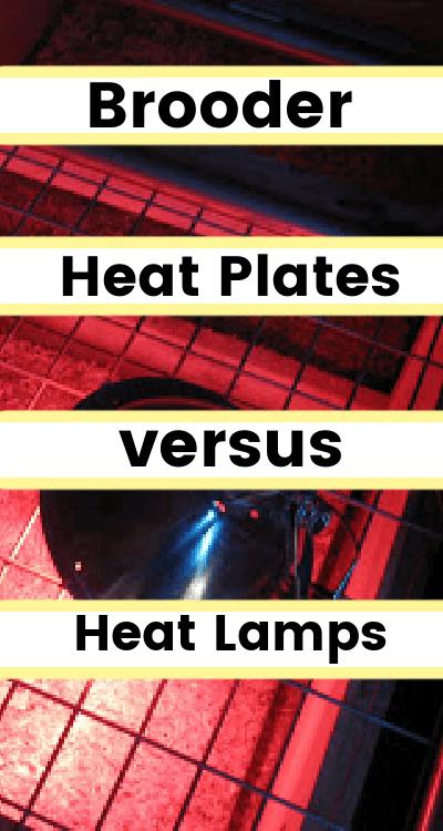 brooder heat plates vs heat lamps