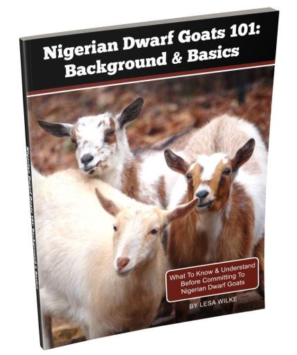 nigerian dwarfs goats 101