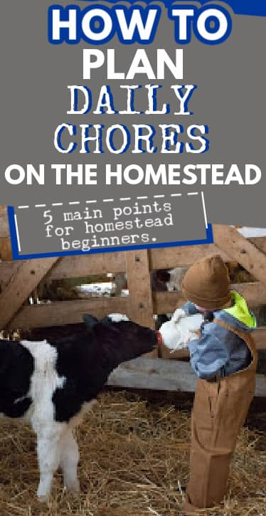 daily chores on the homestead