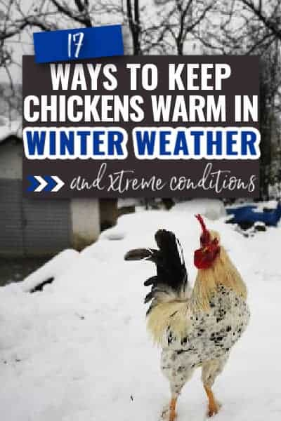 keep chickens warm in winter weather