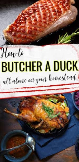 butcher a duck alone