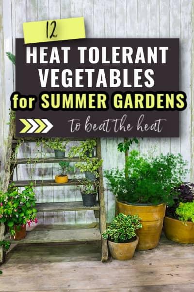 heat tolerant vegetables
