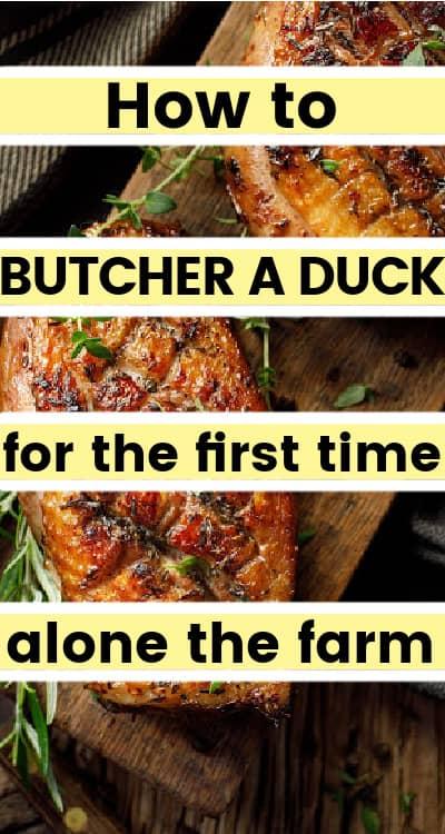how to blucher a duck